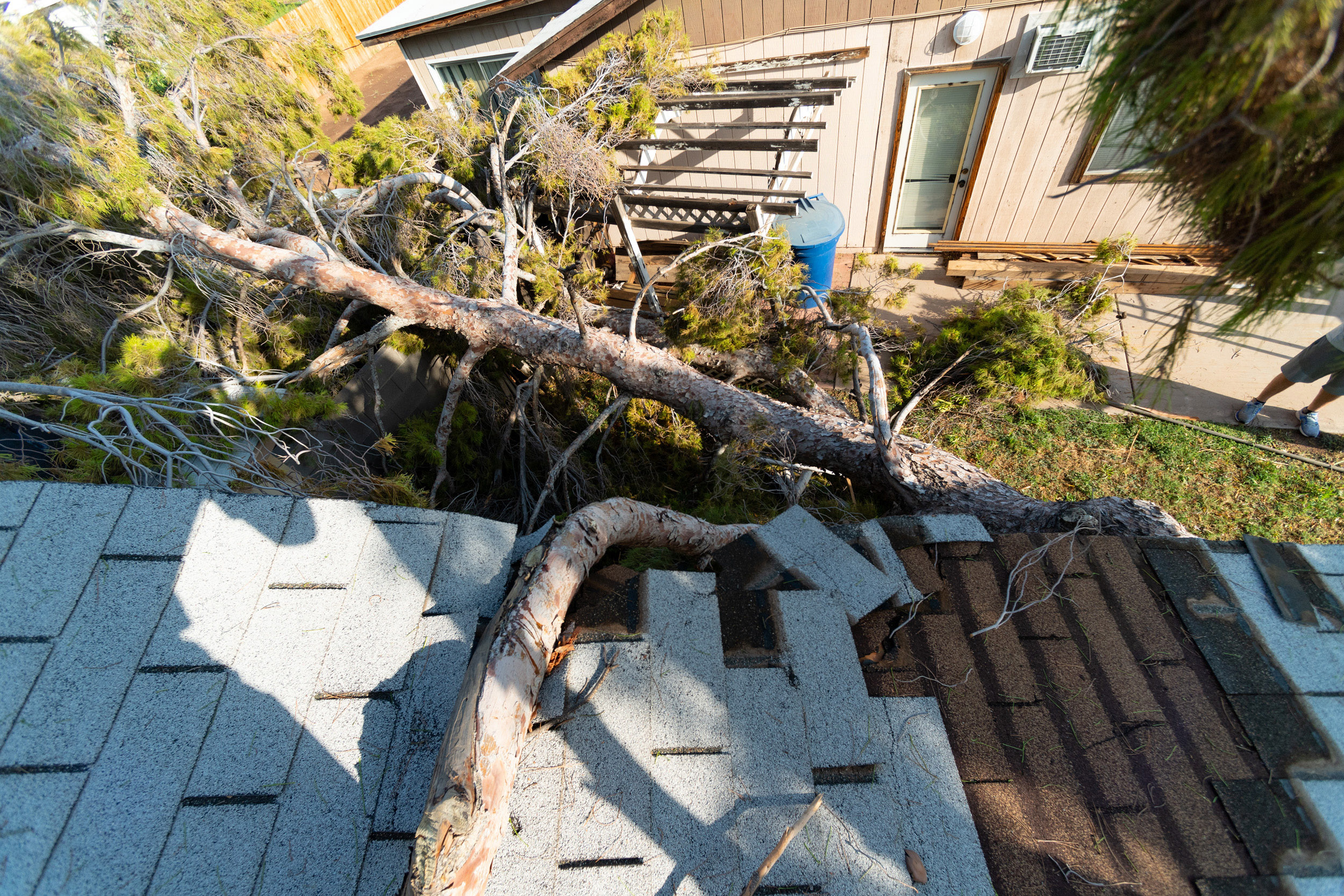 Damaged Roof by Tree
